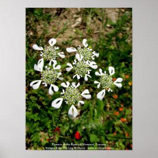 Blumen im Ripertoli Weinberg, Toskana Poster