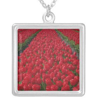 Blumenfeld der Tulpen, die Niederlande, Holland Halskette Mit Quadratischem Anhänger