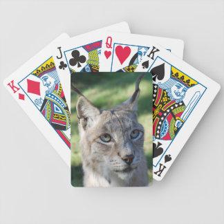 BOBCAT ~ Luchs ~ Lynx ~ Foto: Jean-Louis Glineur Bicycle Spielkarten