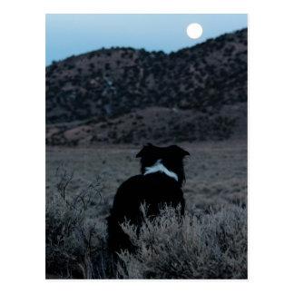 Border-Collie-Astronom Postkarte