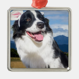 Border-Collie Quadratisches Silberfarbenes Ornament