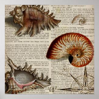 botanischer Druck Küstentritonshorn Vintagen Poster