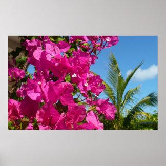 Bouganvilla-und Palme-tropische Natur-Szene Poster