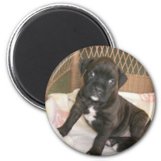 Boxer-Baby! Magnets