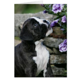 Boxer-Hundekeuchen Karte