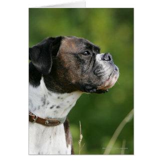 Boxer-Hundeprofil Karte