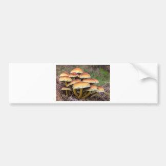 Braune Pilze der Gruppe im Fallwald Autoaufkleber
