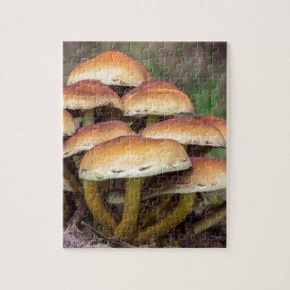 Braune Pilze der Gruppe im Fallwald Foto Puzzle
