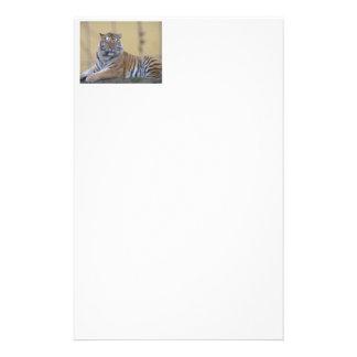Briefpapier Tiger