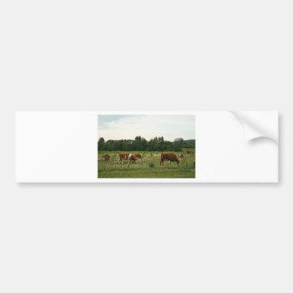 Brown und weißes Hereford Vieh Autoaufkleber