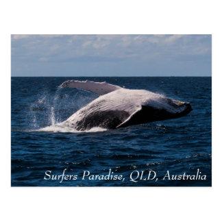 Buckel-Wal, der Surfer-Paradies durchbricht Postkarte