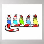 Budgies- Weihnachten Plakate