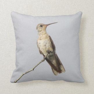 Buffy Kolibri Leucippus Fallax Vogelbeobachters Kissen