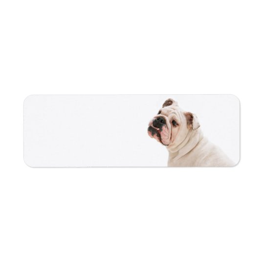 Bulldoggen-Rücksendeadresse-Aufkleber Rückversand-Adressaufkleber