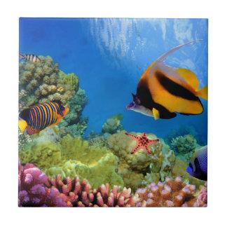 Bunte Koralle u. tropische Fische Fliese