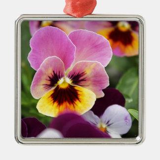 Bunte rosa und gelbe Pansy-Blume Quadratisches Silberfarbenes Ornament