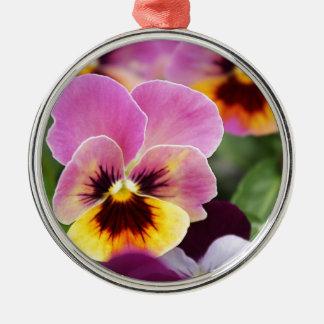 Bunte rosa und gelbe Pansy-Blume Silbernes Ornament