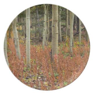 Bunter Aspen-Waldboden Melaminteller