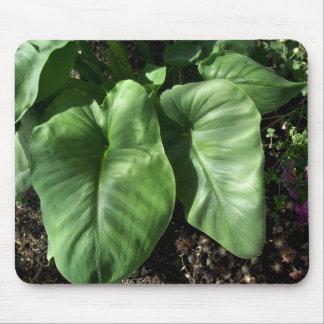 Calla-Lilien-Blätter Mousepads