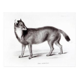 Canis Antarcticus Postkarte