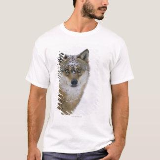 Canis Lupus, Kamera betrachtend, Deutschland, T-Shirt