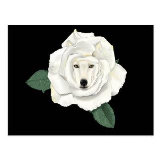 Canis Rosa Postkarte