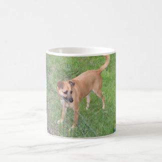 Carolina-Hund volles 2.png Kaffeetasse