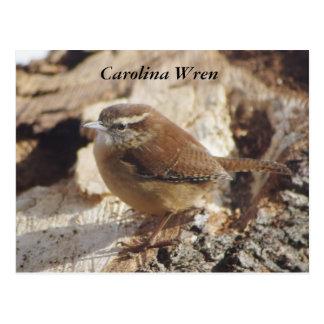 Carolina-Zaunkönig Postkarte