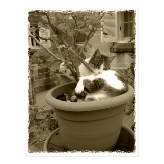 Cat is taking a nap in a plant pot postkarte