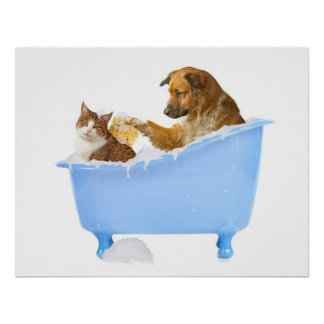 Cat- Wash Poster