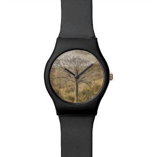 Ceiba-Baum an trockenem WaldGuayas Bezirk - Armbanduhr