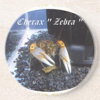 cherax zebra.jpg untersetzer