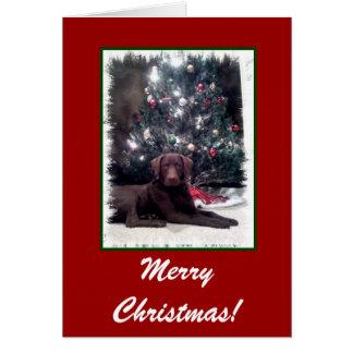 Chesapeake Bay-Retriever, frohe Weihnachten! Karte