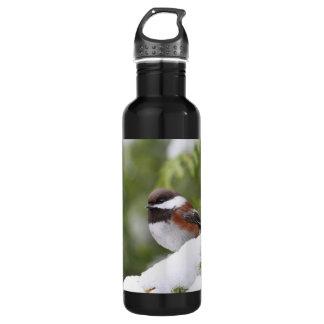 Chickadee im Schnee auf einem Zedern-Baum Trinkflasche
