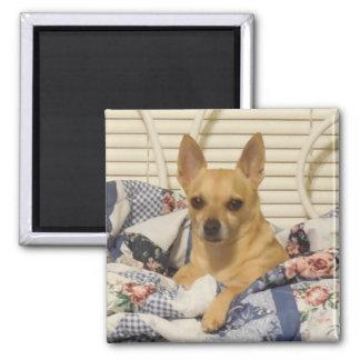 Chihuahua oder Ihr Foto-Magnet Quadratischer Magnet
