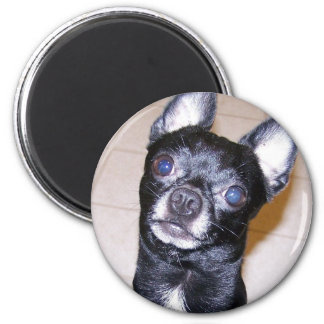 Chihuahua Runder Magnet 5,7 Cm