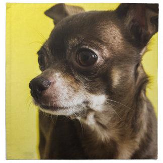 Chihuahua Serviette