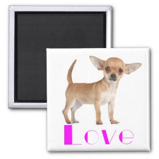 Chihuahua-Welpen-Hund - rosa Liebe-große Ohren Quadratischer Magnet