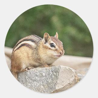 Chipmunk auf einem Felsen Runder Aufkleber