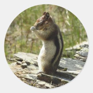 Chipmunk Natur-dem Foto in des Runder Aufkleber