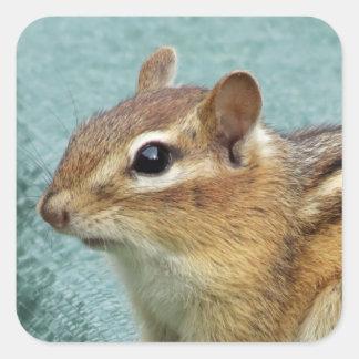 Chipmunk-Porträt Quadratischer Aufkleber