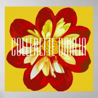 Collerette Dahlie - Plakat (Matt)