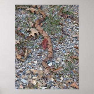 Copperhead Schlange heraus sretched an Dämmerung Poster