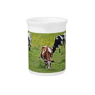 Cows_0068 Getränke Pitcher