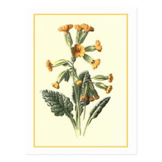 """Cowslip"" botanische Illustration Postkarte"