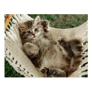 Cute Kitten in Hammock Postkarte