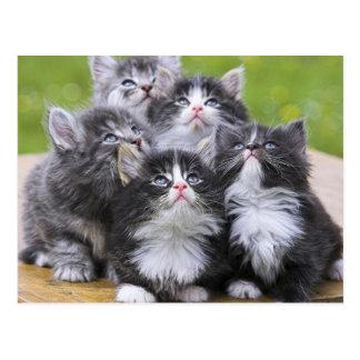 Cute kittens postkarte