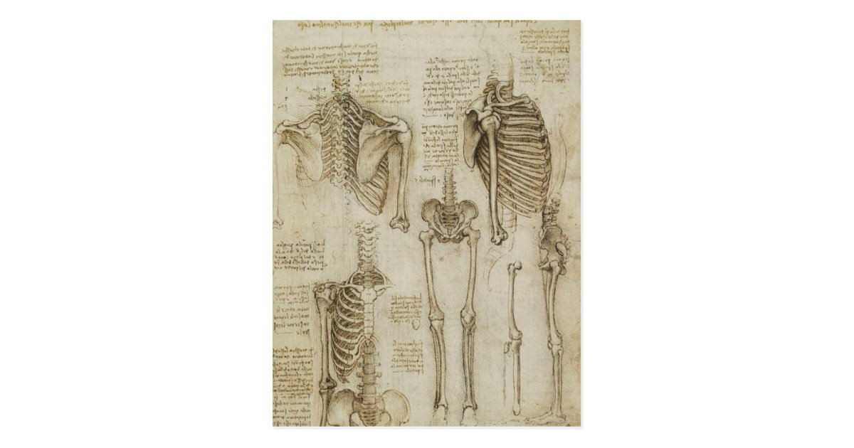 Da Vincis menschliche Skeleton Anatomie-Skizzen Postkarte | Zazzle.at