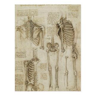 Da Vincis menschliche Skeleton Anatomie-Skizzen Postkarten