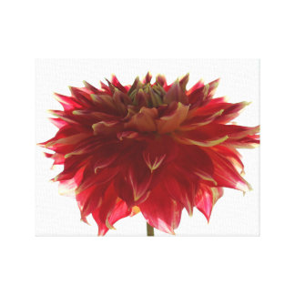 Dahlie-Blume digitale Malerei eingewickelte Leinwanddruck